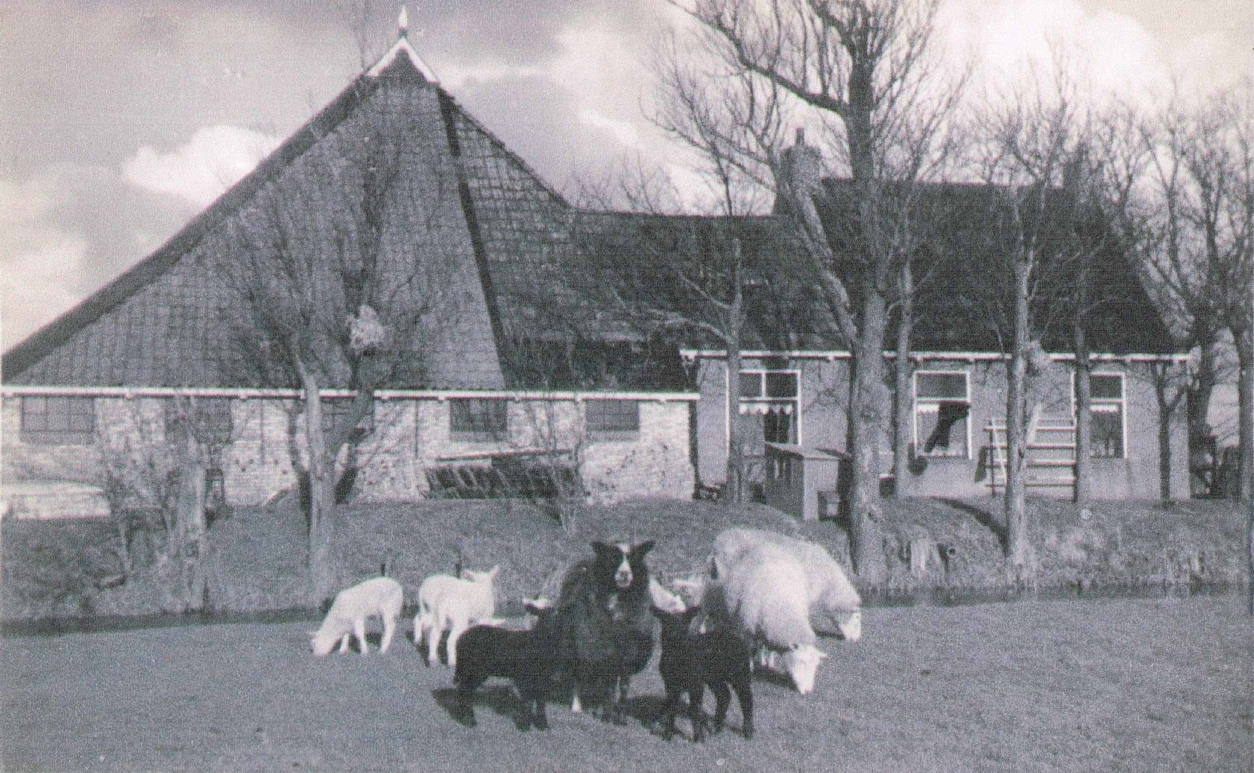 De 'oude boerderij' van Cleyn Alserd vanaf de zijkant bekeken, hier nog zonder schelpenpad
